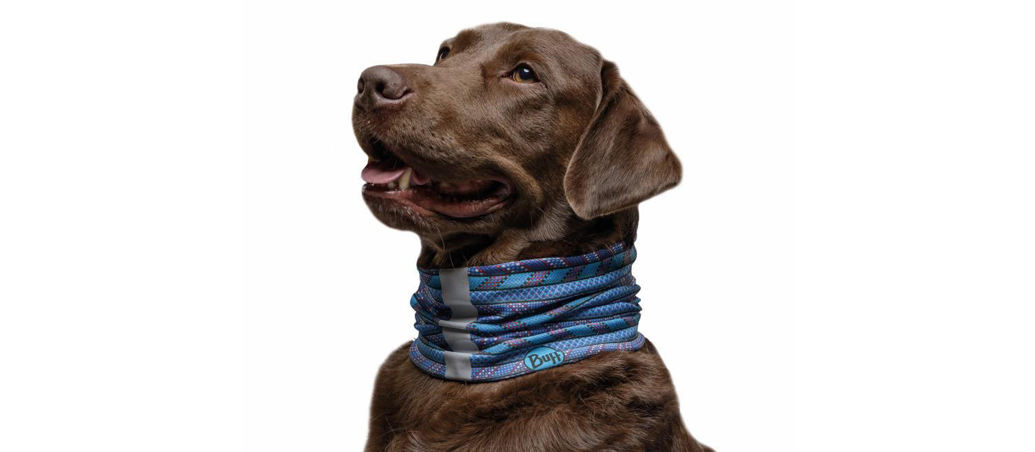 The studio image shows a brown dog with a blue dog Buff®. Source: buff.eu